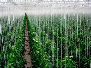 Все для подвязки растений
