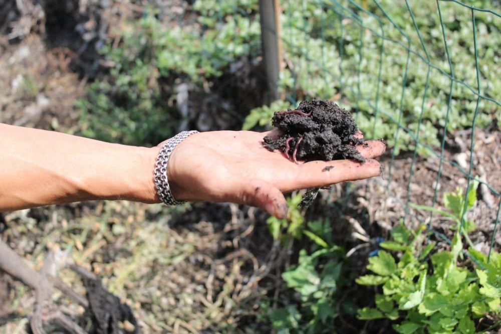 В Павлодарской области  разводят червей