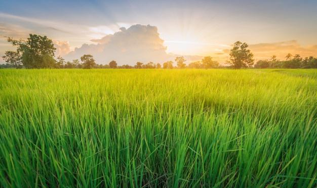 Правила аренды сельхозземель упрощены